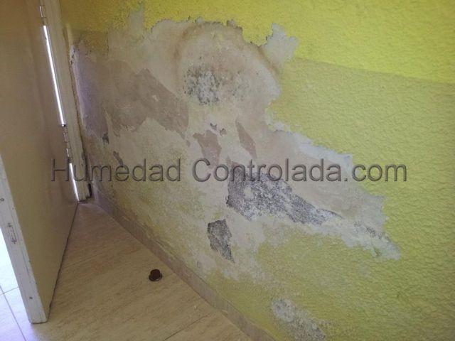 eliminar la humedad en paredes