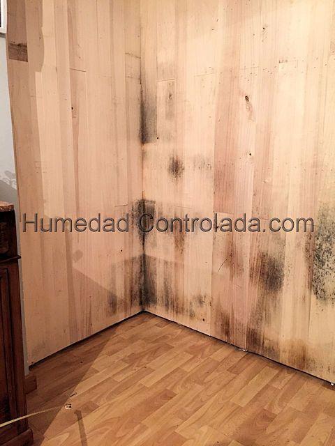 humedad en la madera