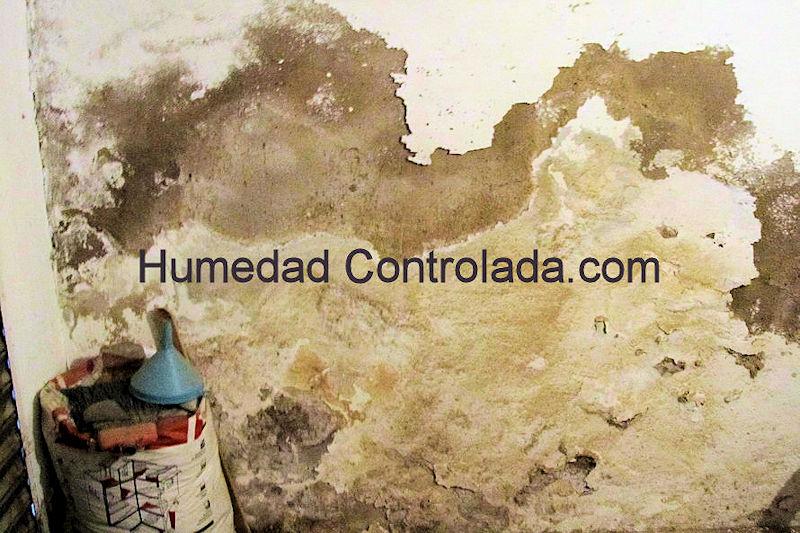 solución para tus paredes con humedad