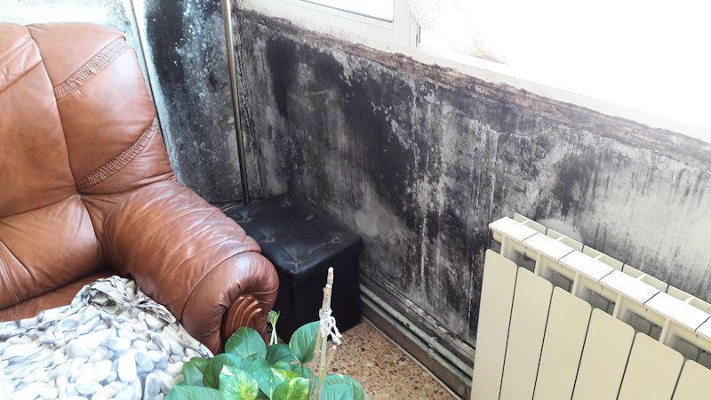 mohos en paredes de la casa y olor a humedad